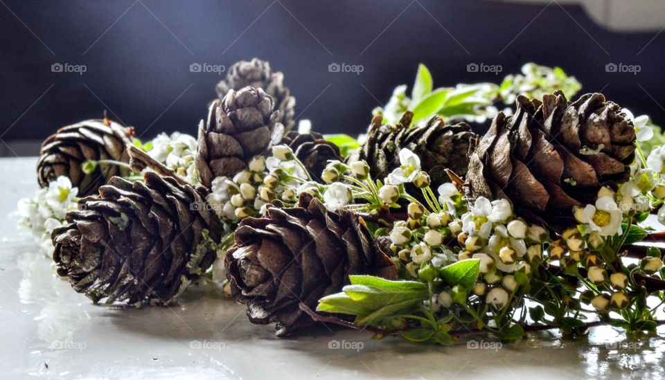Pinecones and Flowers