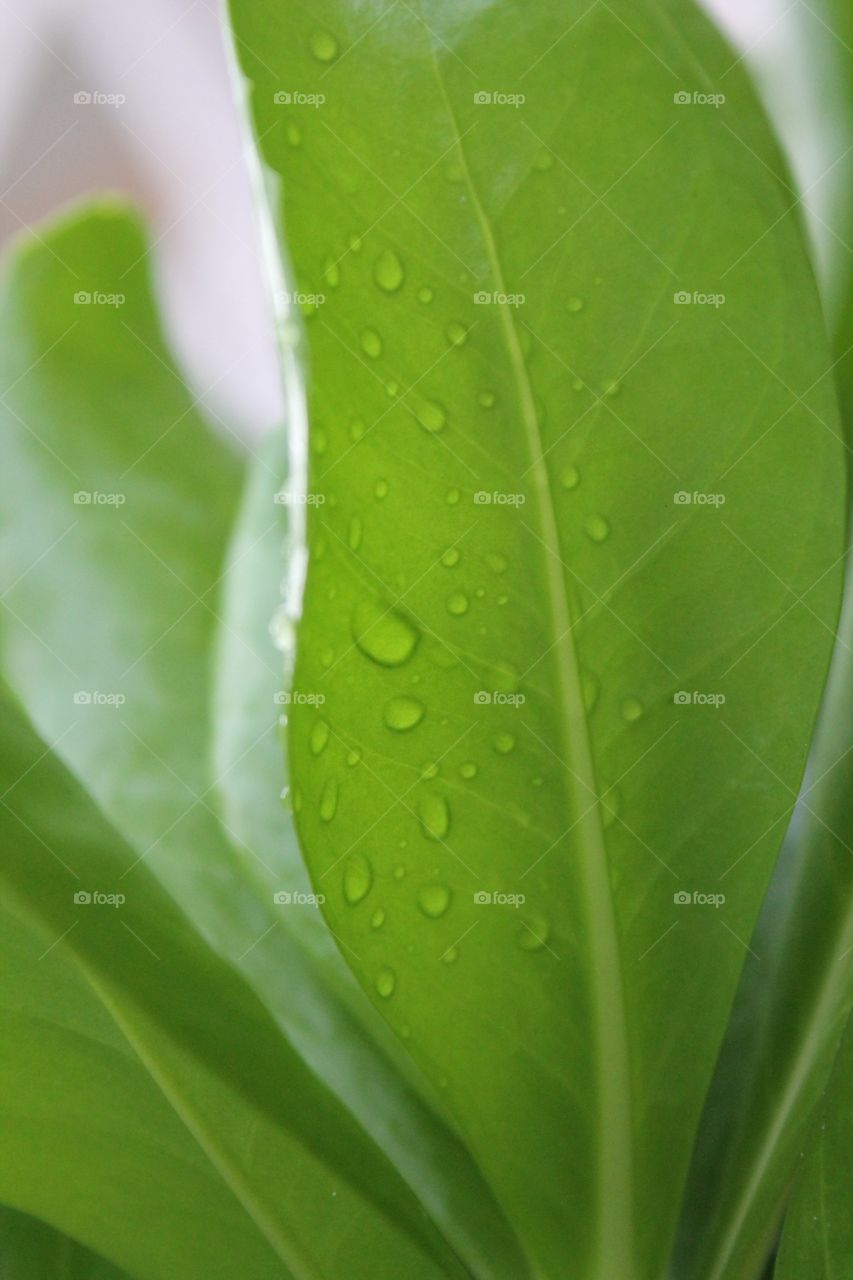Palm tropical leaf wet from rain