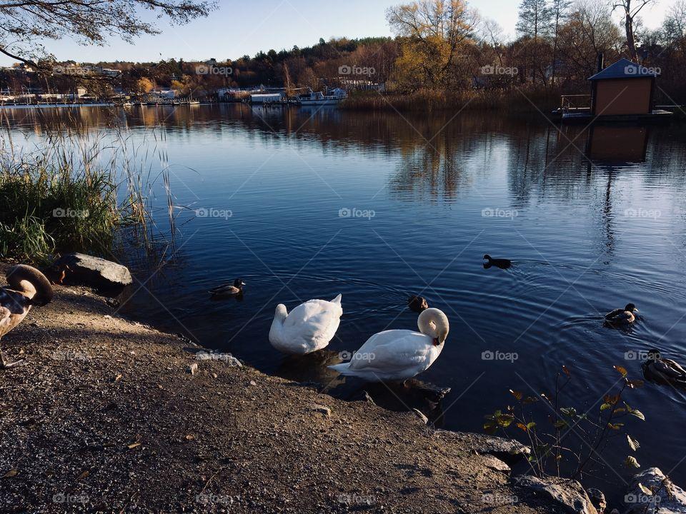 Birds at lake