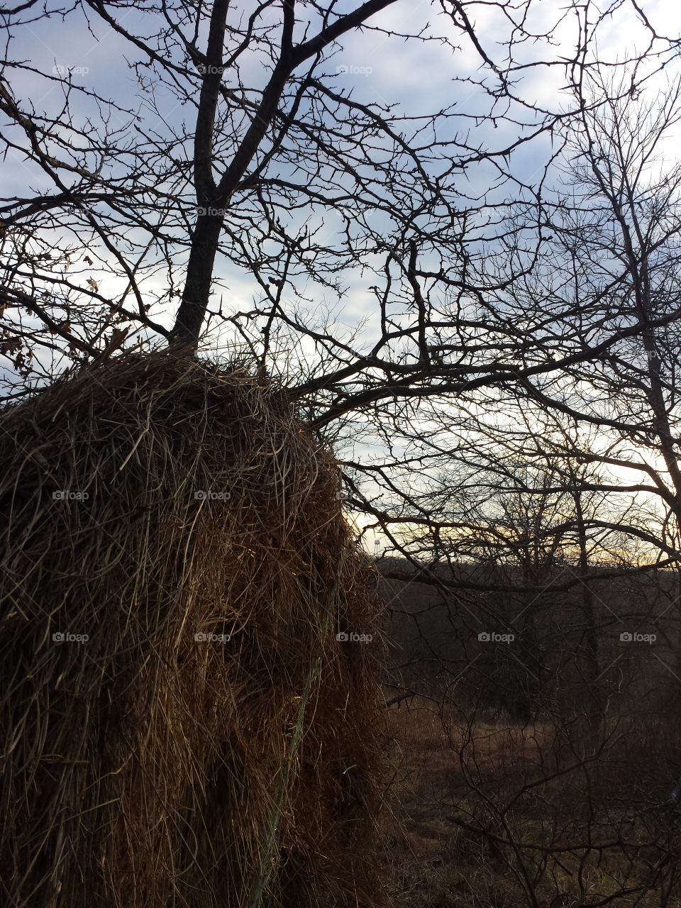 February Woodland Views