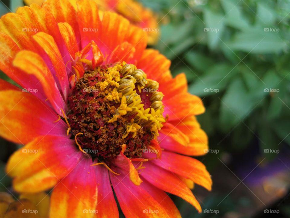 natural bright colors