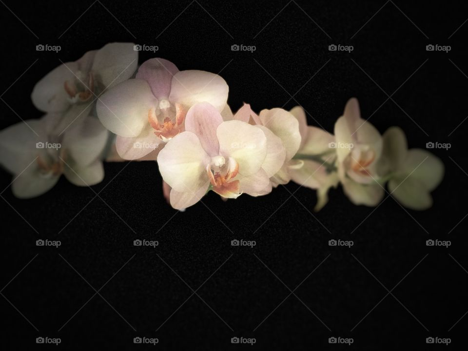 Stunning, Peaceful and.Beautiful Orchid. Perfect for Canvas and Metal Art,. Conveys Yoga, Health, Serenity, Love, Peace and Simplicity!