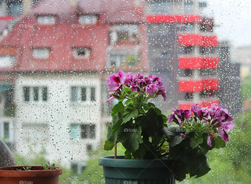 House potted plant inside a window, rainy day