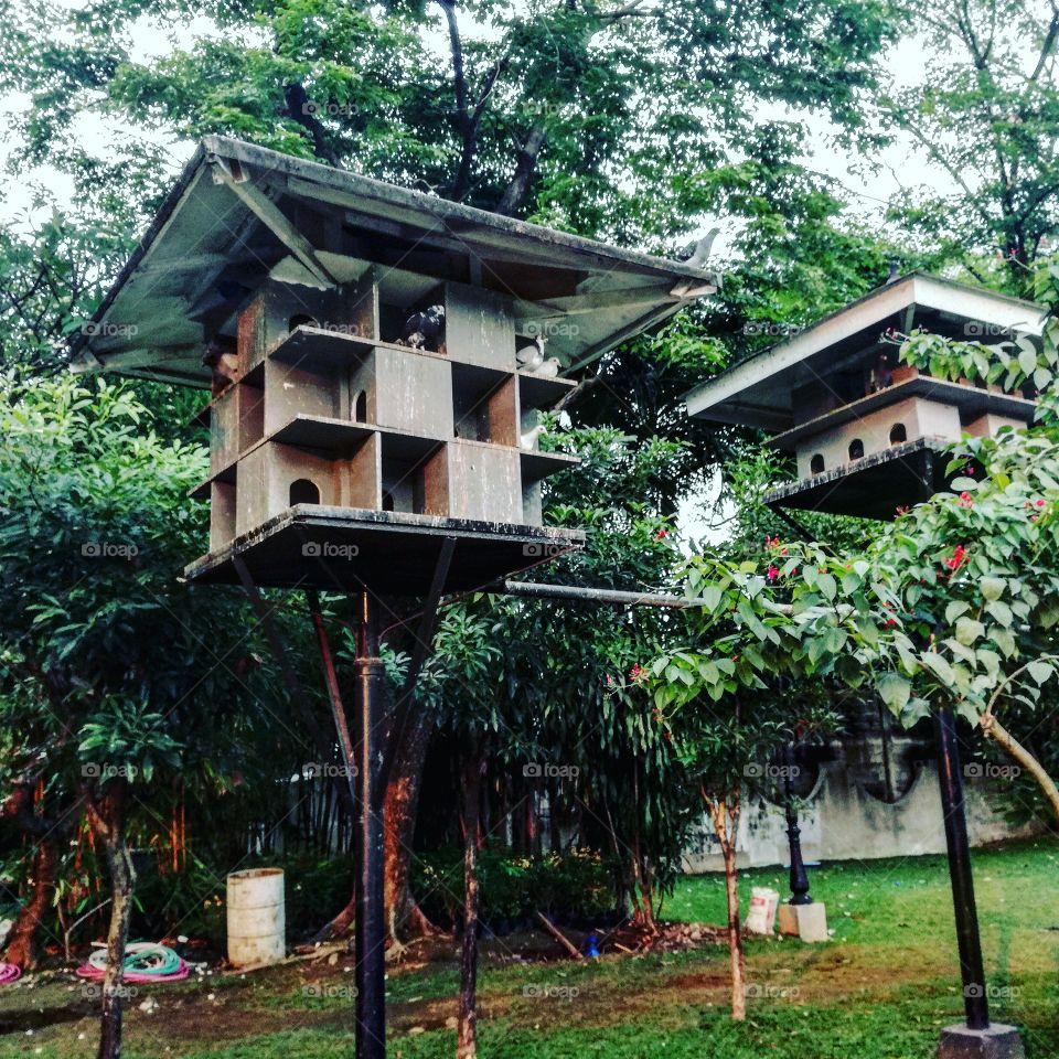 Bird's houses. 🕊️🐦