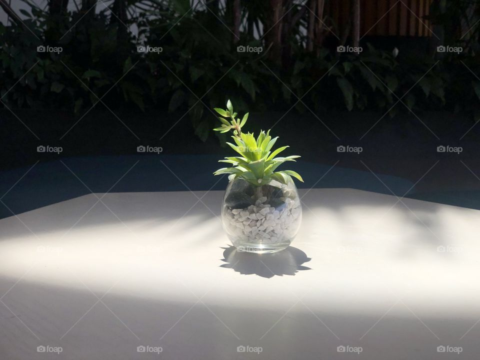Plant in the sunlight