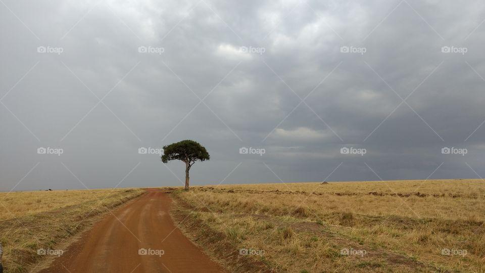 Lone tree in desert landscape