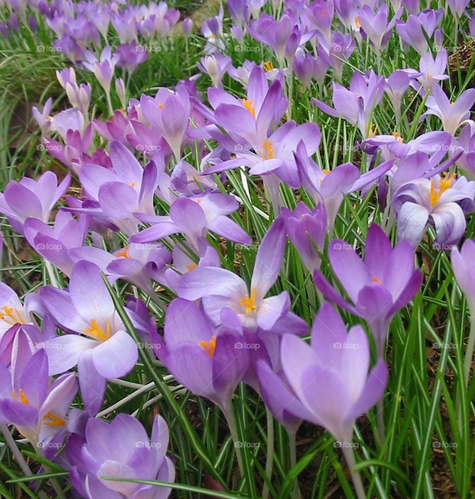 Purple flower blooming in field