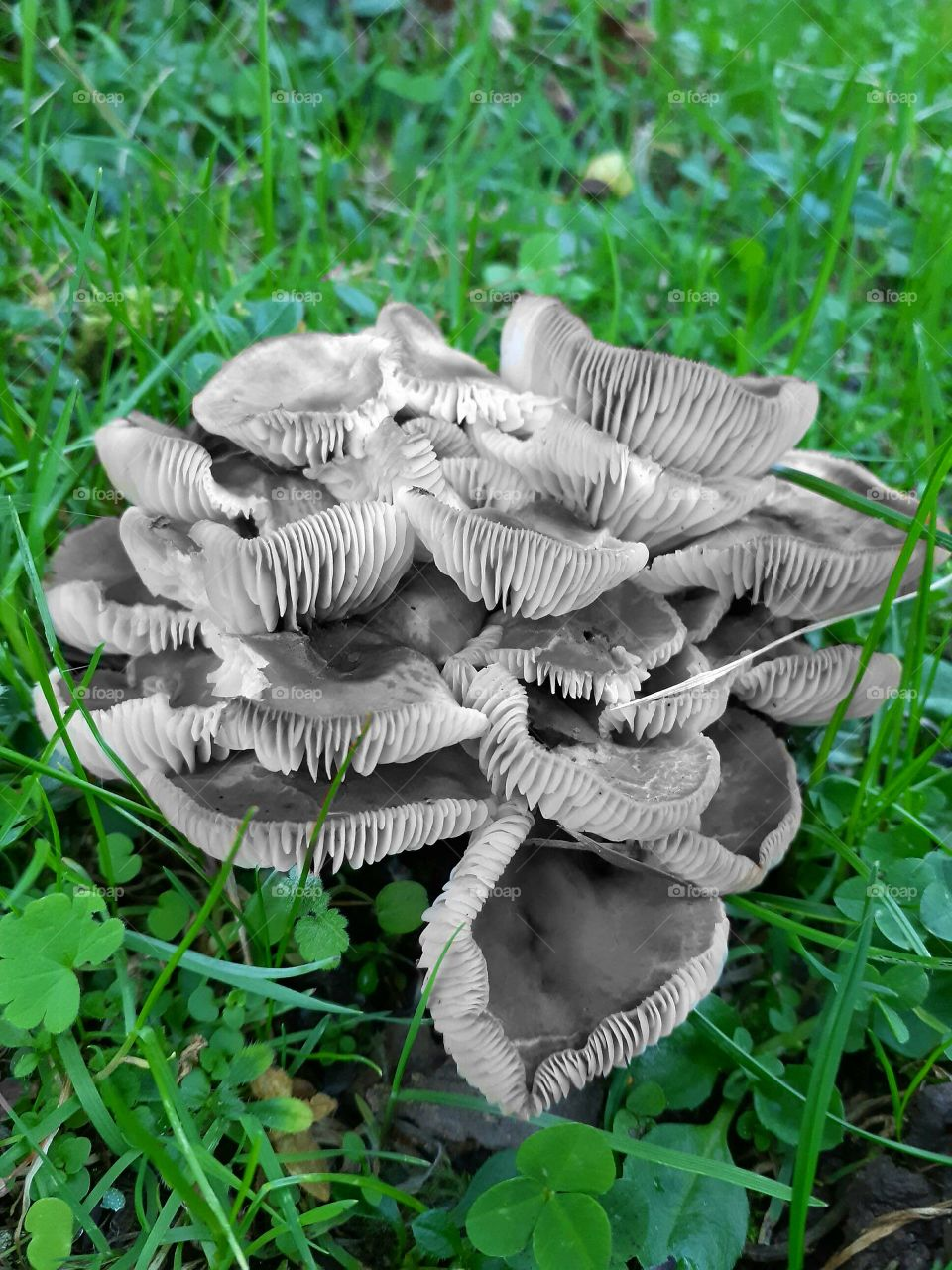 How they look like mushrooms with no color compared to green grass??