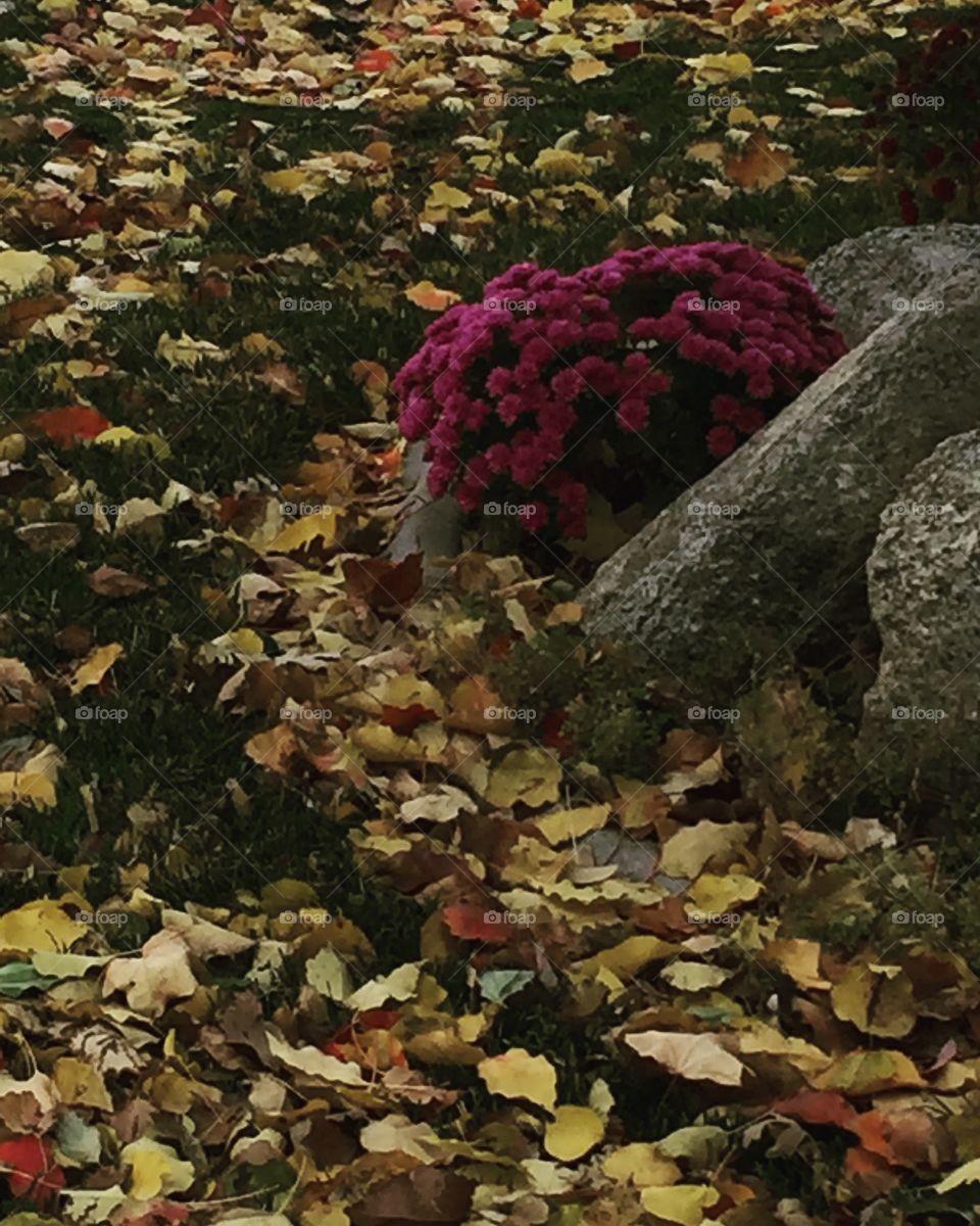 Summer and Autumn