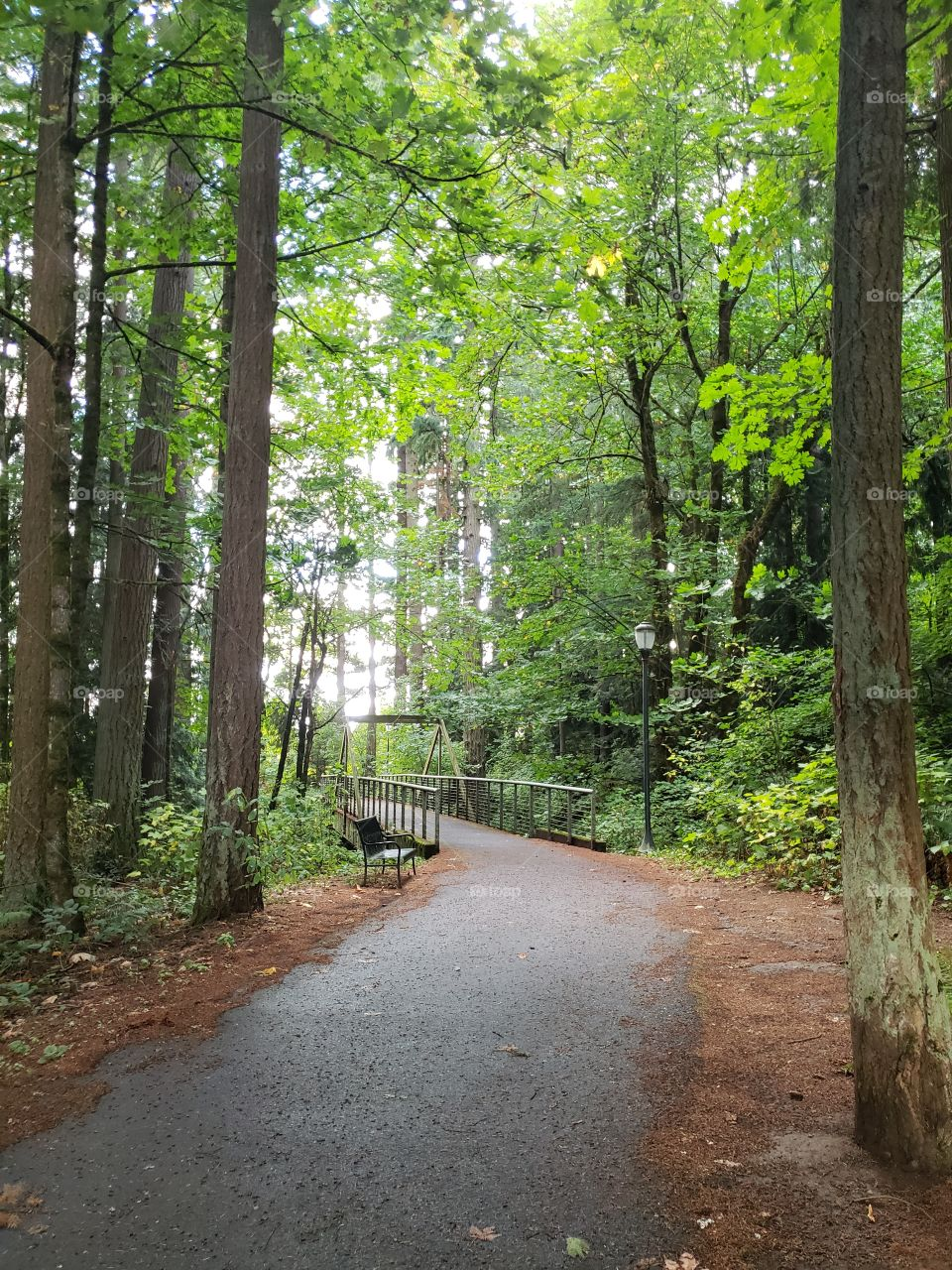 Bridge on forest path