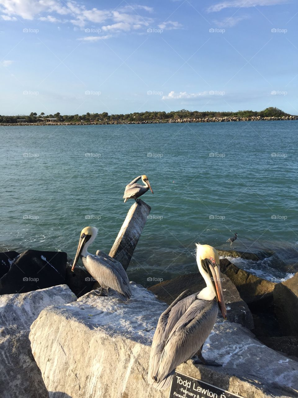 Beautiful water scene with pelicans and rocks