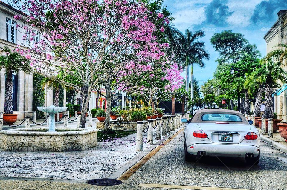 West Palm Beach chic