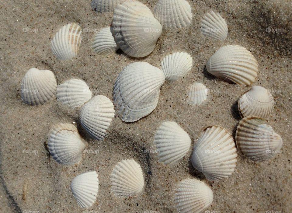 Beach shells.