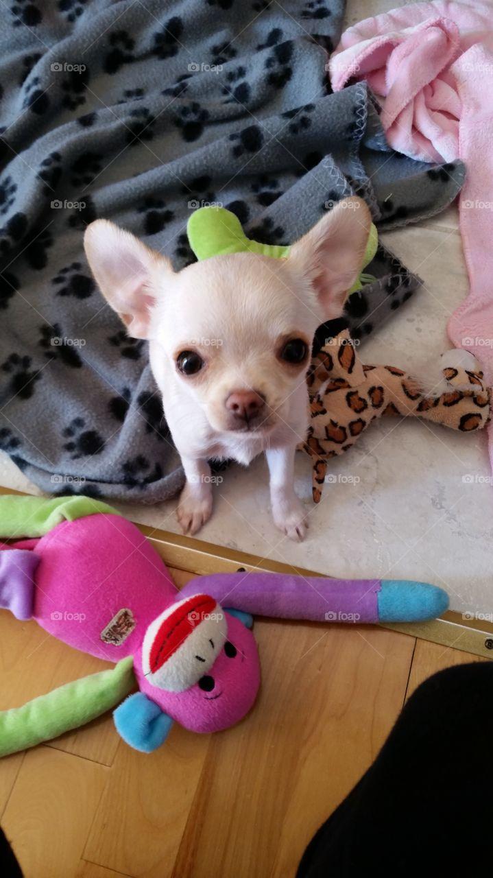 cuty baby dog bestday doglife