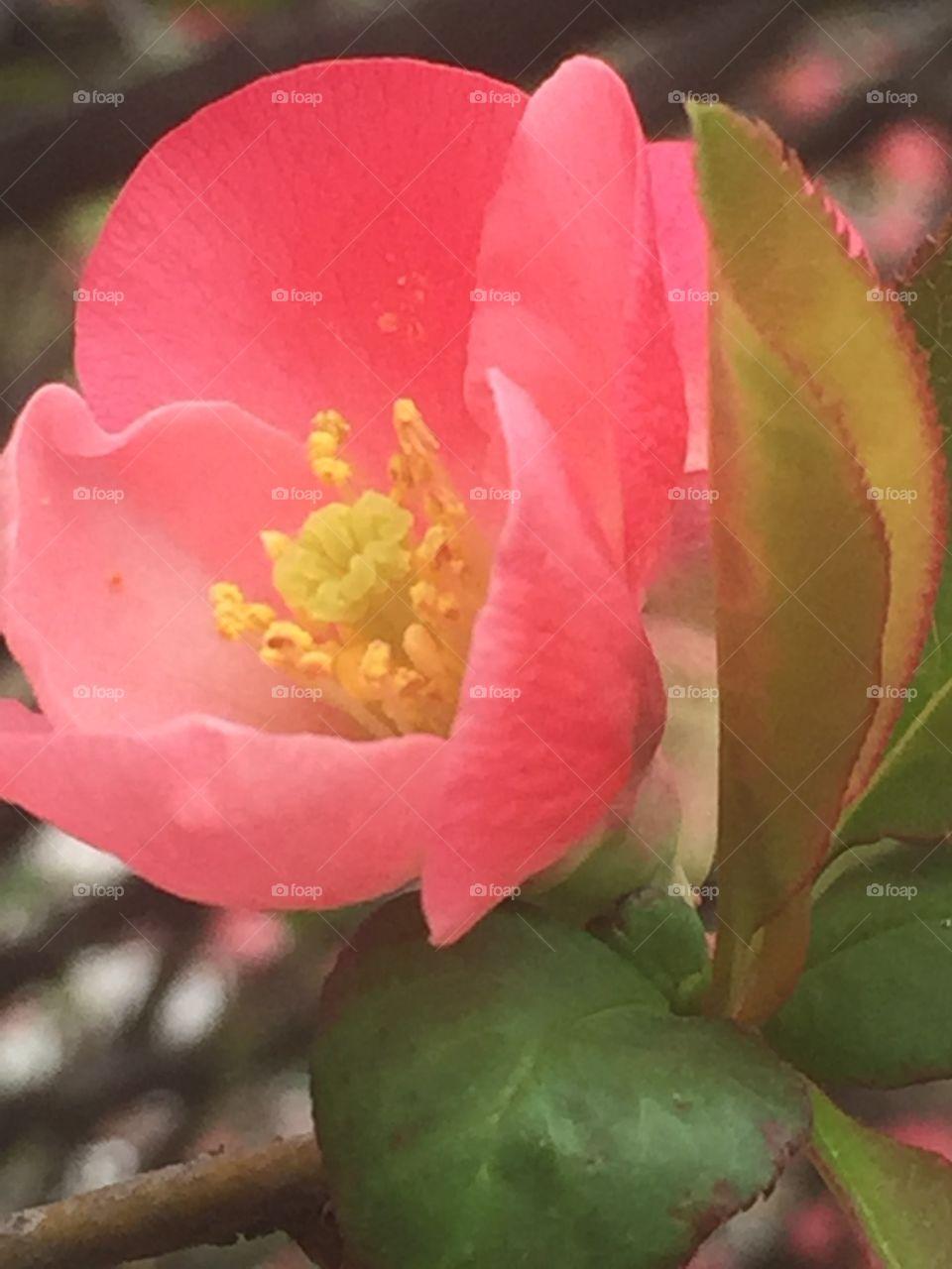 Beautiful blooms of spring