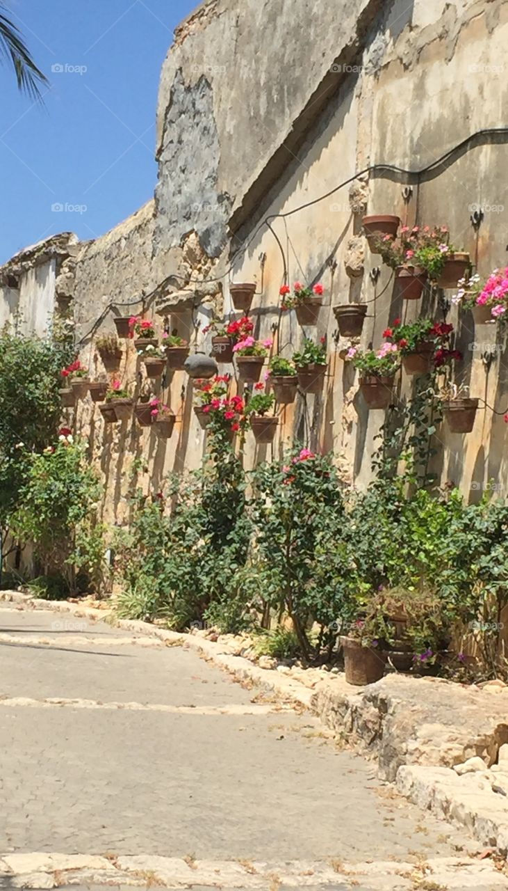 Old wall with planter with flowers