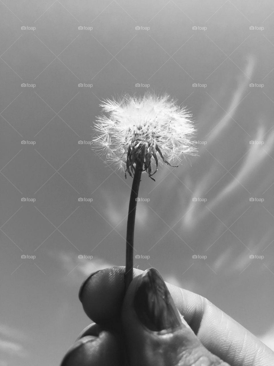 Black and white dreams