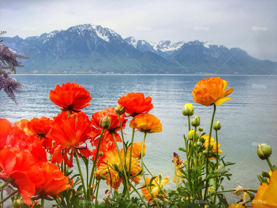 Blooming flowers and landscape view at montreux, switzerland