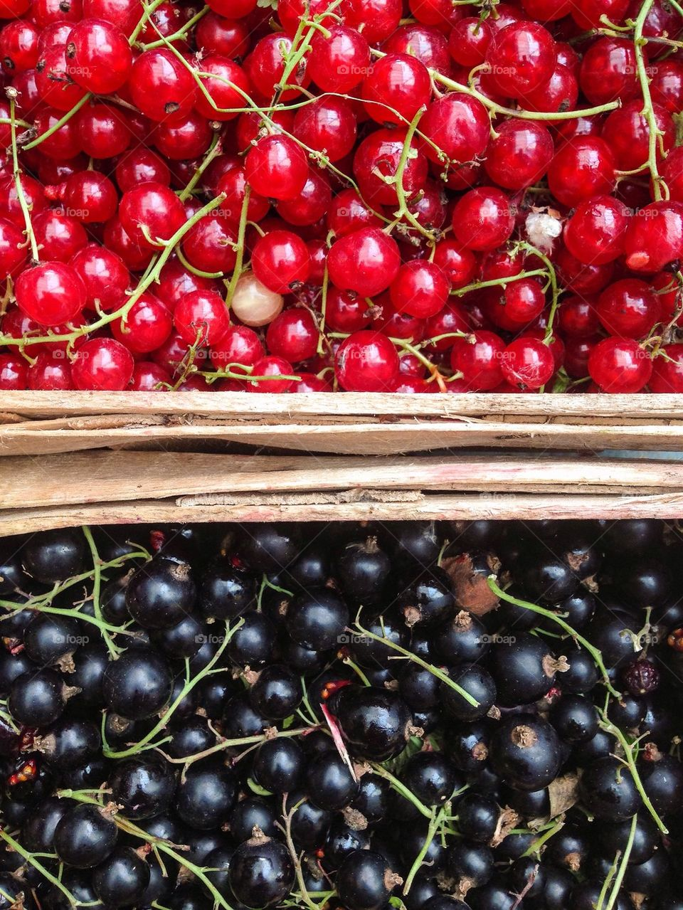 Red currants and black currants