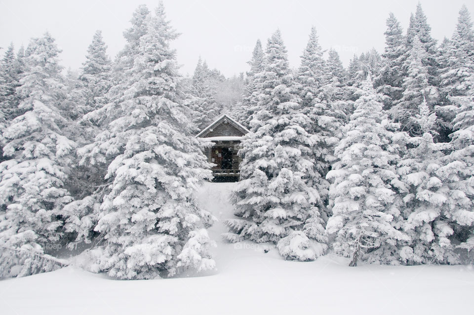 A cabin on a winter day in the snowy woods