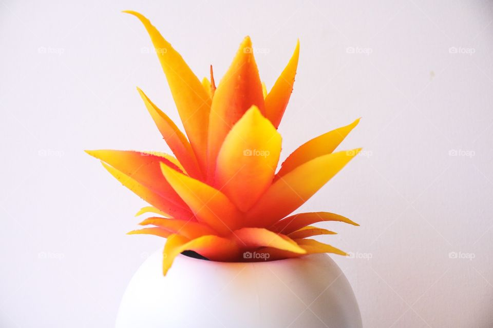 Bright spiky orange house plant in pot