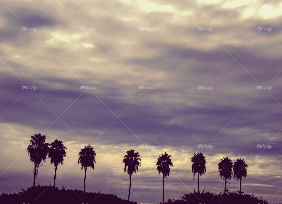 Palm trees and dark clouds