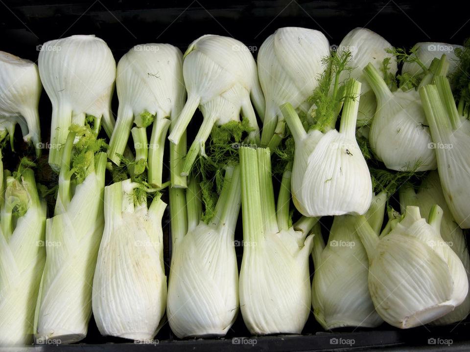 Fennel vegetables.