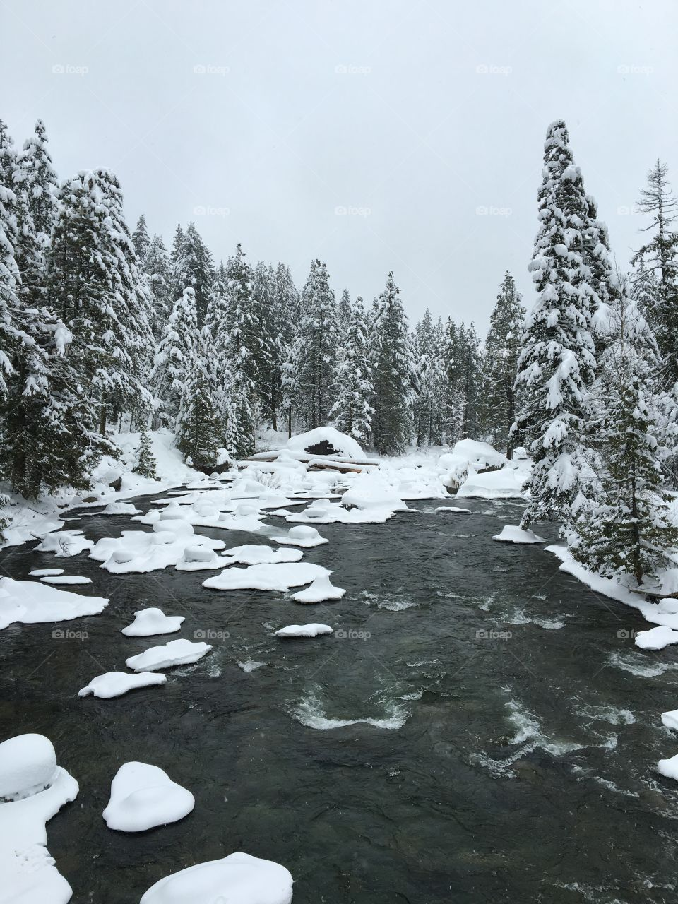 Mountain creek in winter with snow covered trees