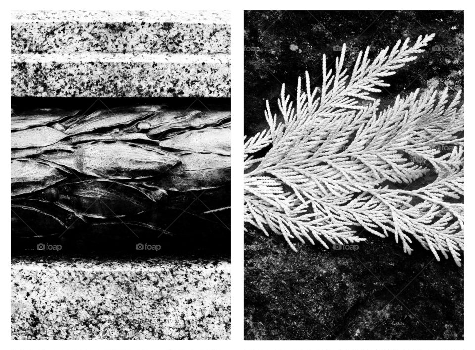 These diptychs are part of a photographic series I did that compares the man made to the nature made through similarity of shapes and textures.