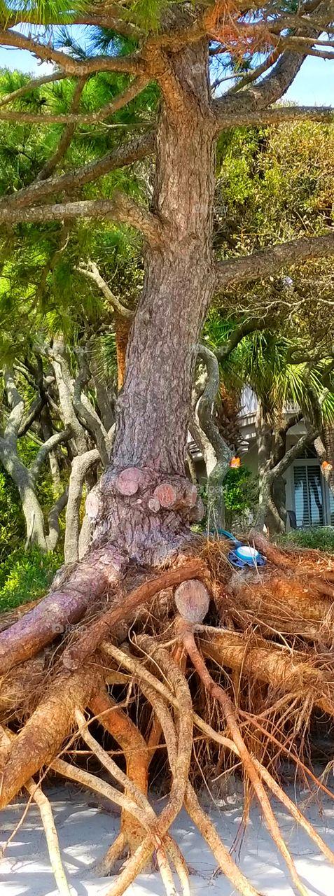 Irma Erosion