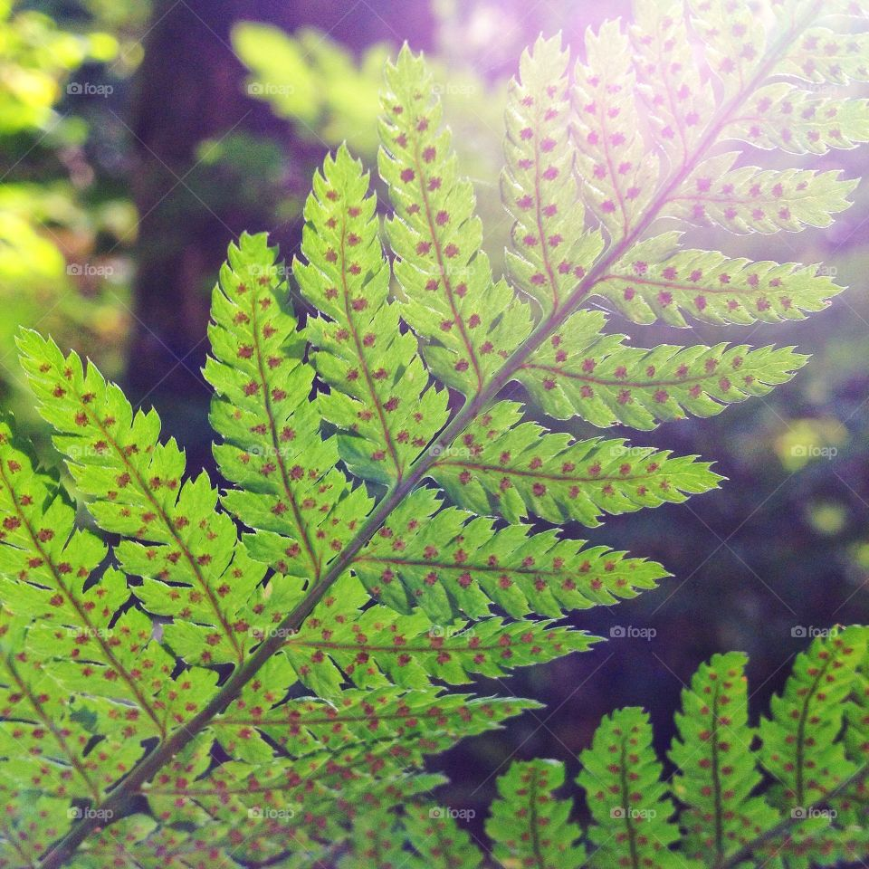Fern close up. Macro shot of a fern leaf