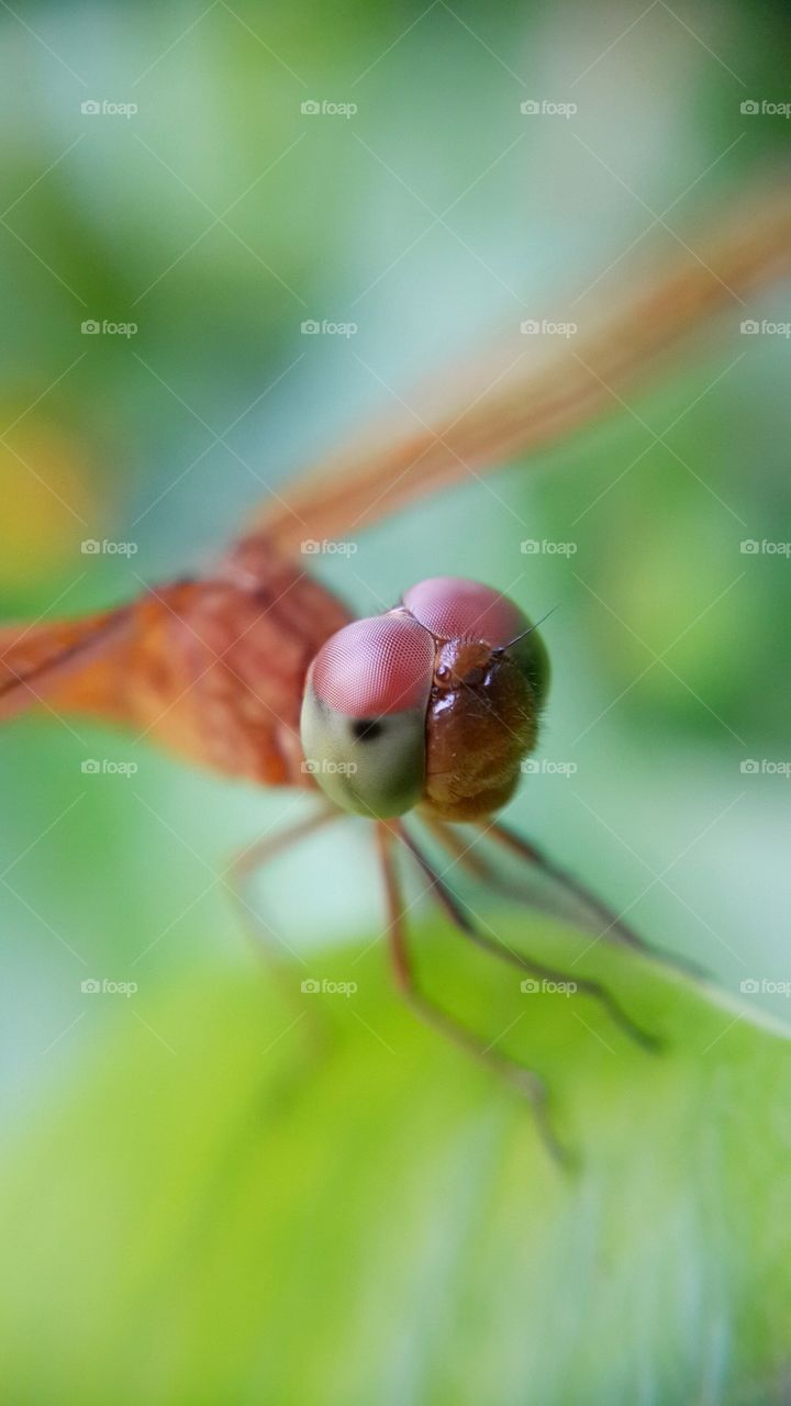 Macro shot of insect's compound eye