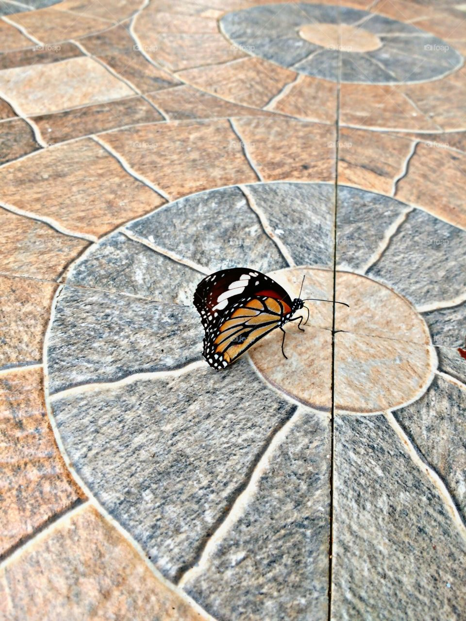 butterfly on flore tiles