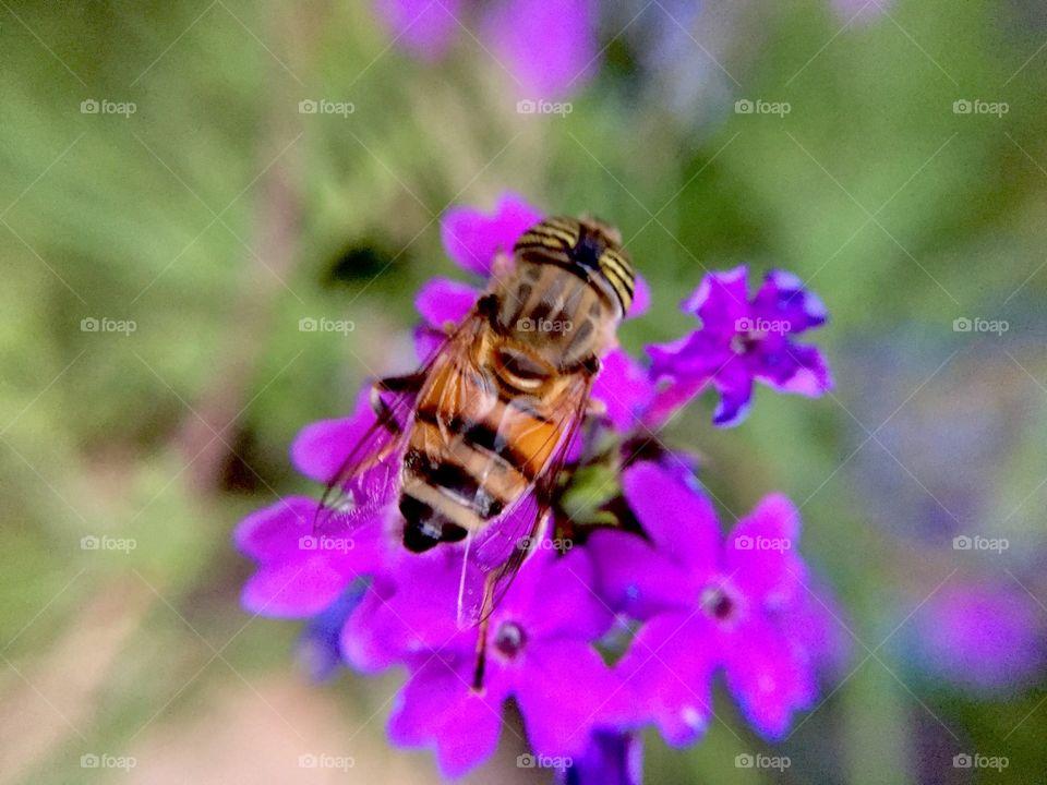 My hobby photography nature