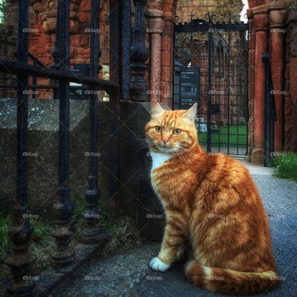 Lindisfarne rat catcher