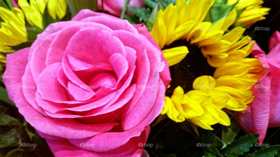 Pink Rose and Yellow Sunflower