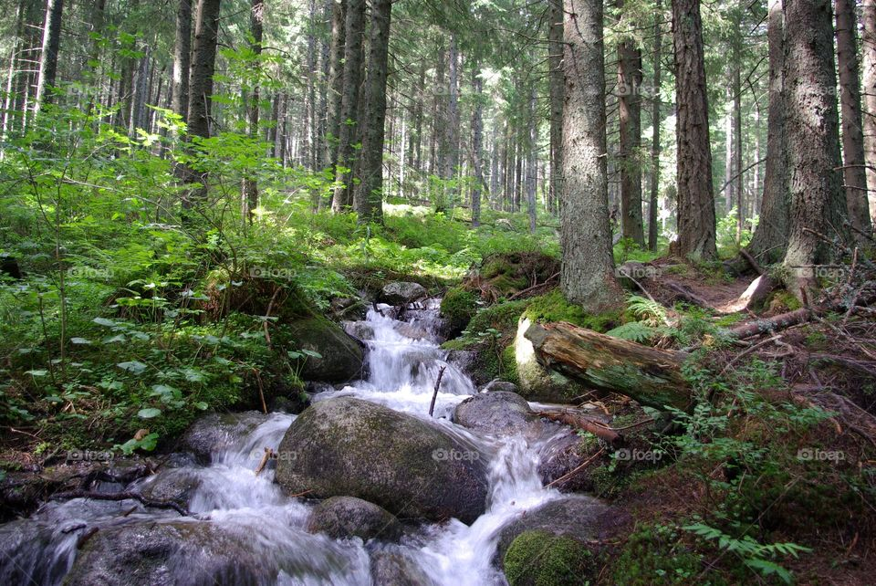 Little river in the forest