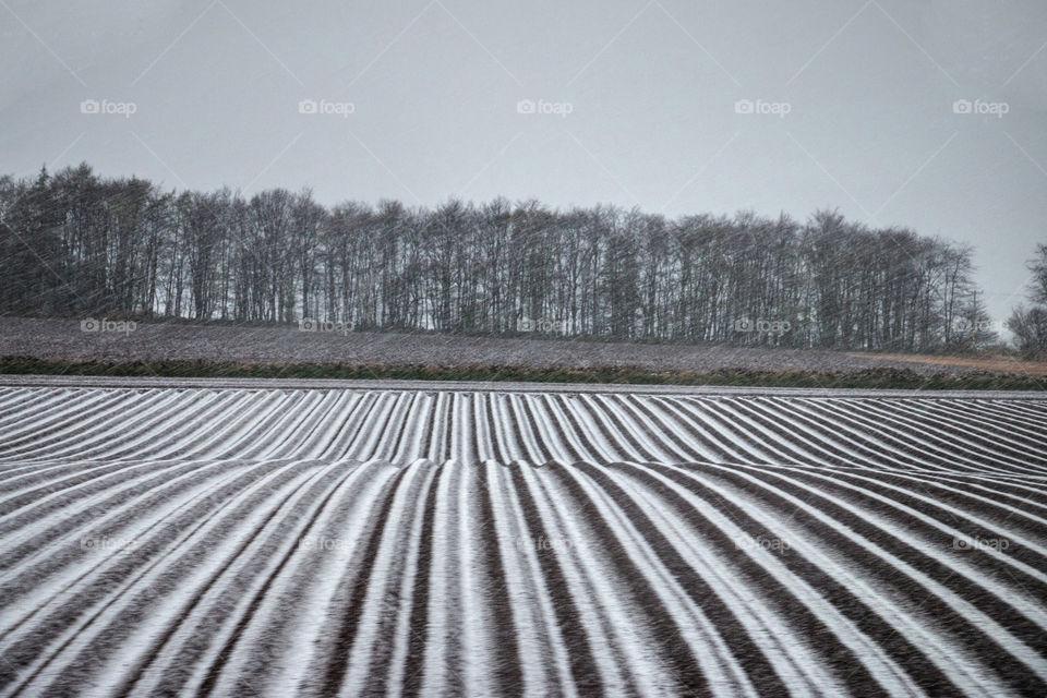 Snowy Scottish farm