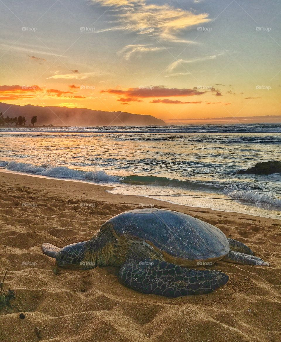 Sunset with Honu🐢