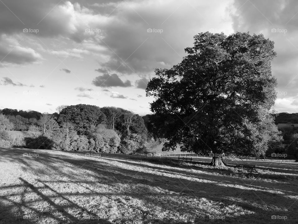 Dartington Countryside in Black and White, reflecting on how it was before color, now though black and white seems as popular as ever.