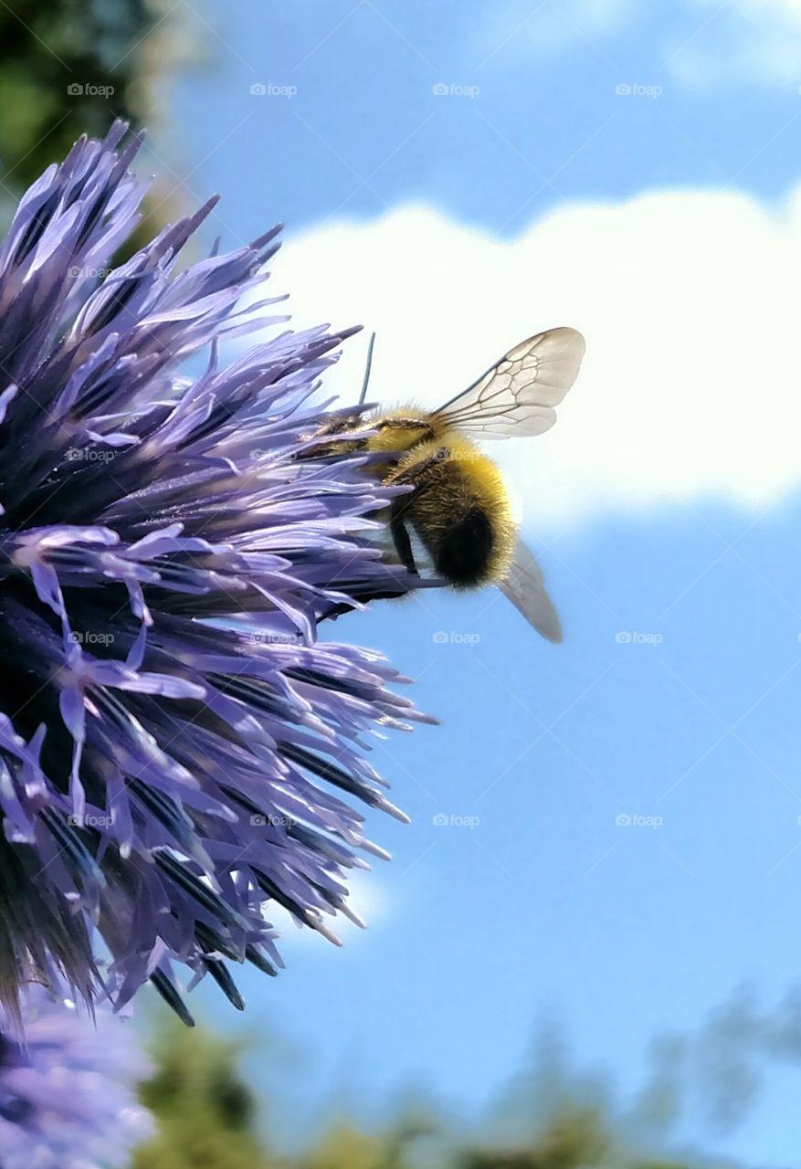 Bee Spring Already