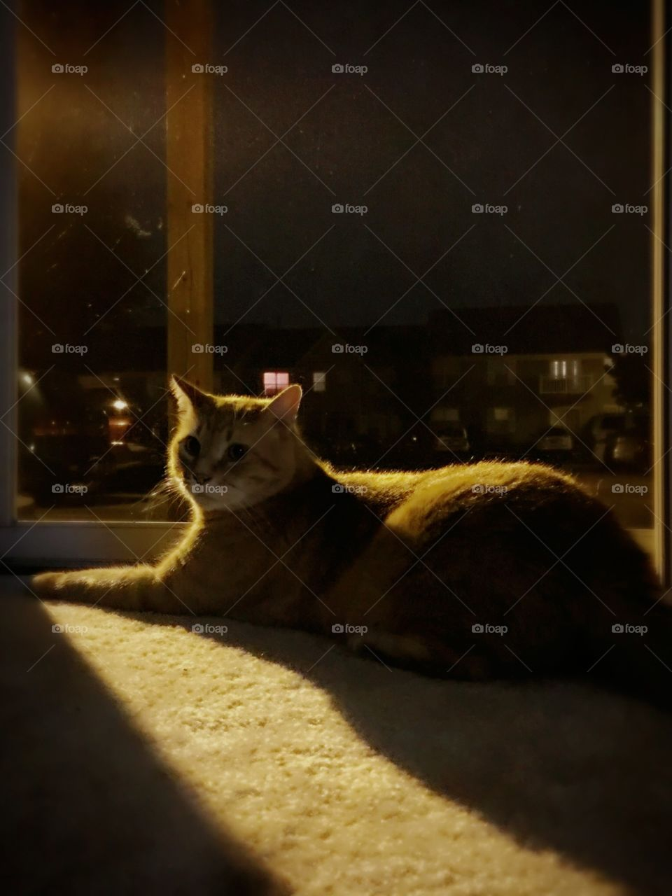 Portrait of a cat in the shadows
