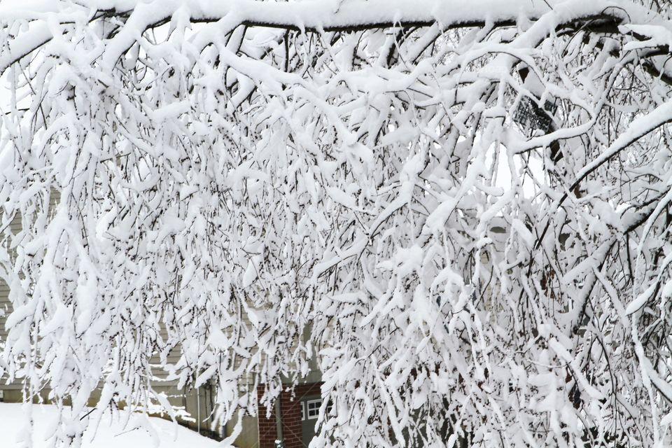 Frost, Desktop, Winter, Snow, Abstract
