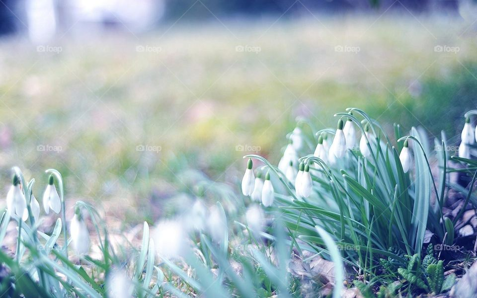 For happiness one needs security, but joy can spring like a flower even from the cliffs of despair..