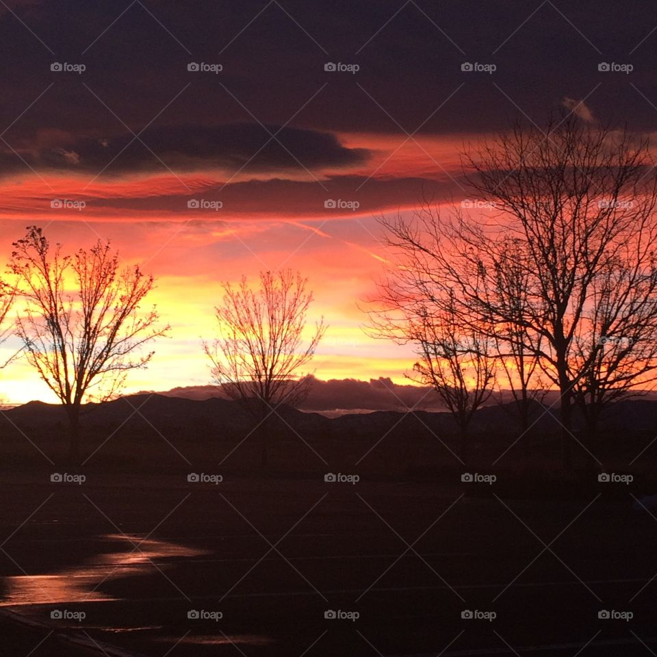 Tree to the setting sun