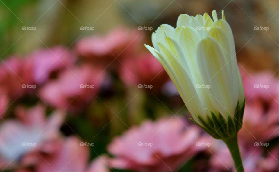 Greece photography Sun sunny spring tree nature plans flower