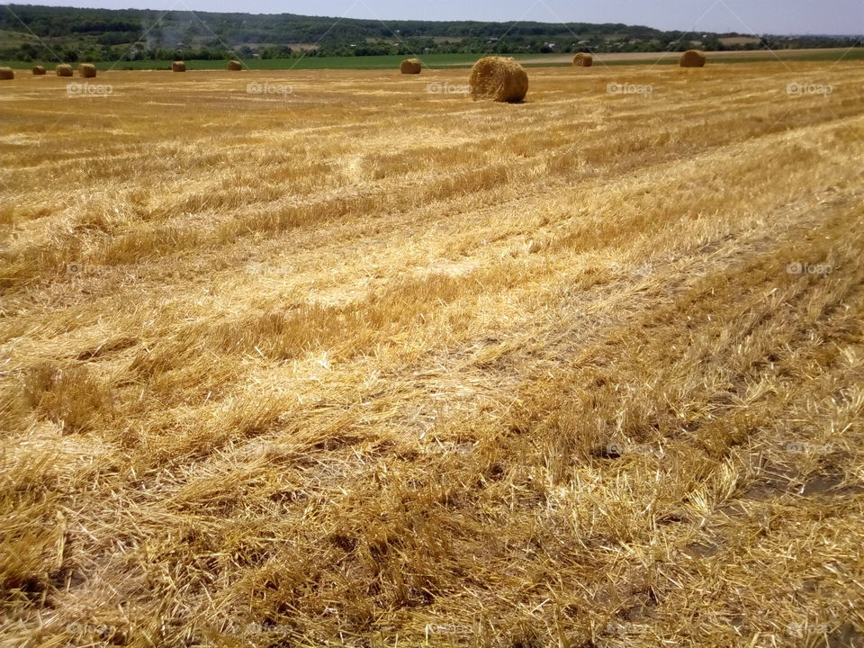 Field after harvested