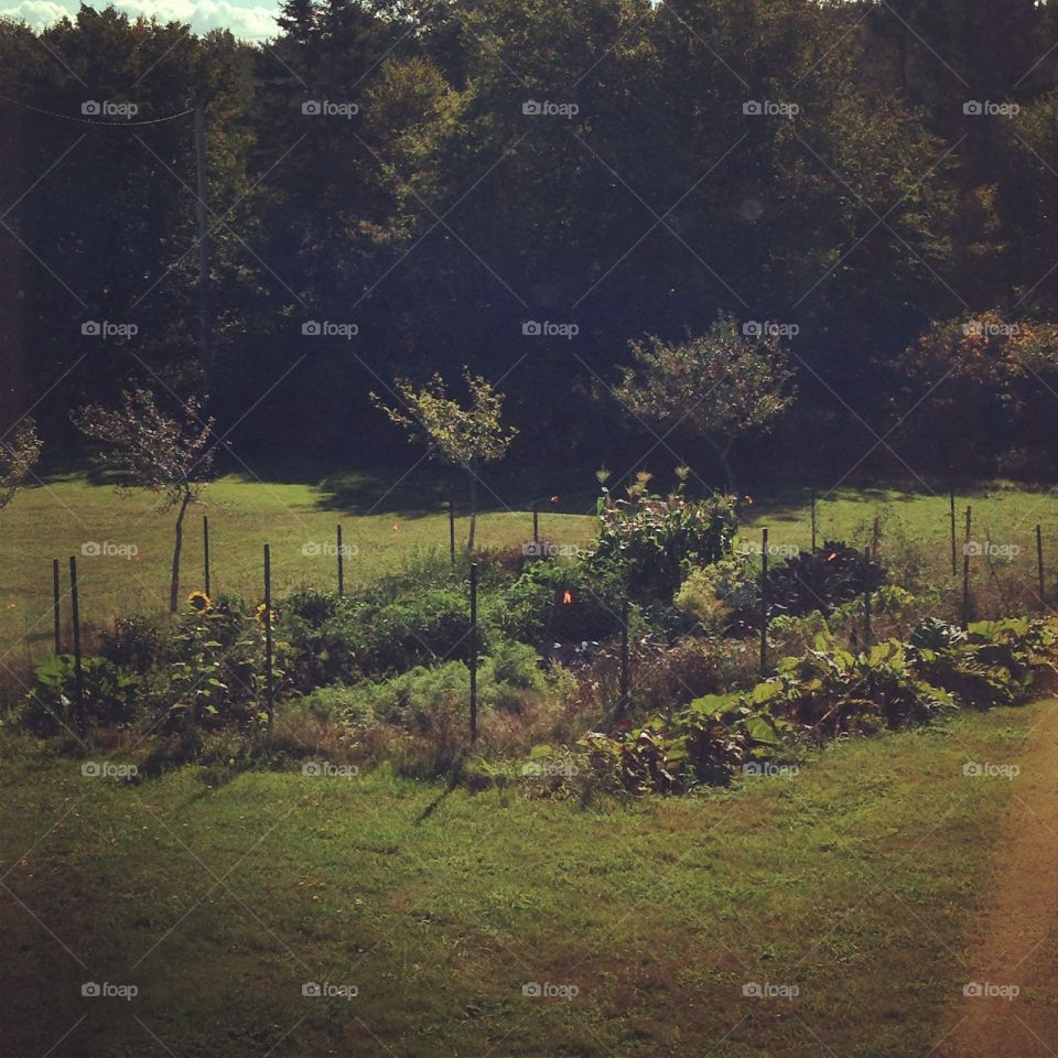 Country Vegetable Garden