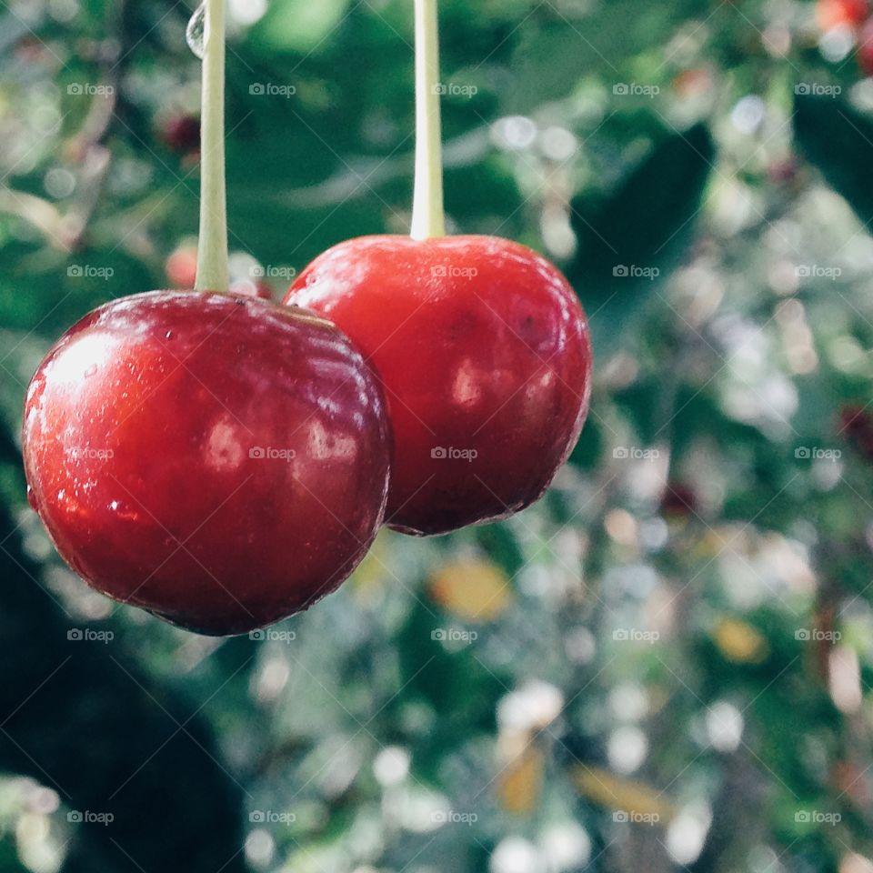 Close-up of a fresh cherry