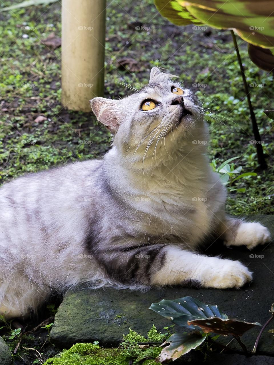 Praying for the catnip